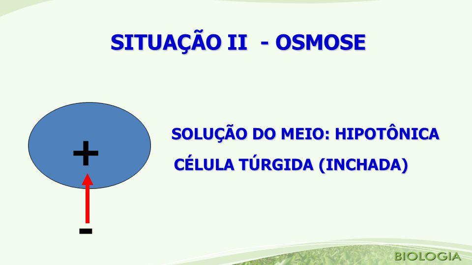 SOLUÇÃO DO MEIO: HIPOTÔNICA CÉLULA TÚRGIDA (INCHADA) + - SITUAÇÃO II - OSMOSE