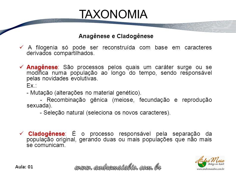 Aula: 01 TAXONOMIA Anagênese e Cladogênese A filogenia só pode ser reconstruída com base em caracteres derivados compartilhados.