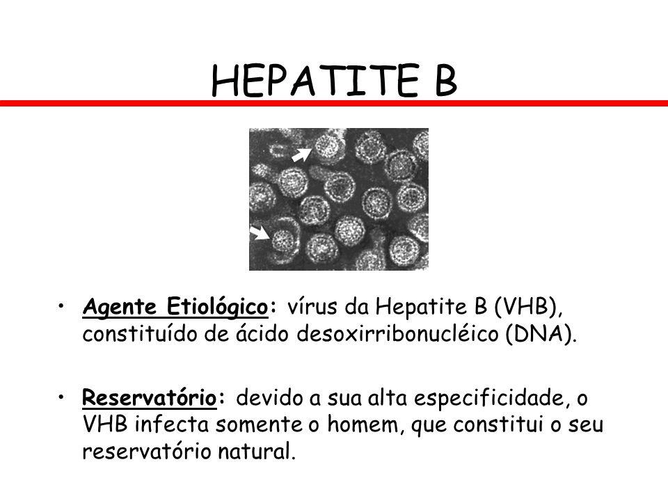 HEPATITE B Agente Etiológico: vírus da Hepatite B (VHB), constituído de ácido desoxirribonucléico (DNA). Reservatório: devido a sua alta especificidad