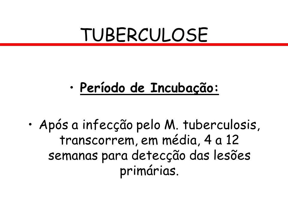 Período de Incubação: Após a infecção pelo M. tuberculosis, transcorrem, em média, 4 a 12 semanas para detecção das lesões primárias. TUBERCULOSE