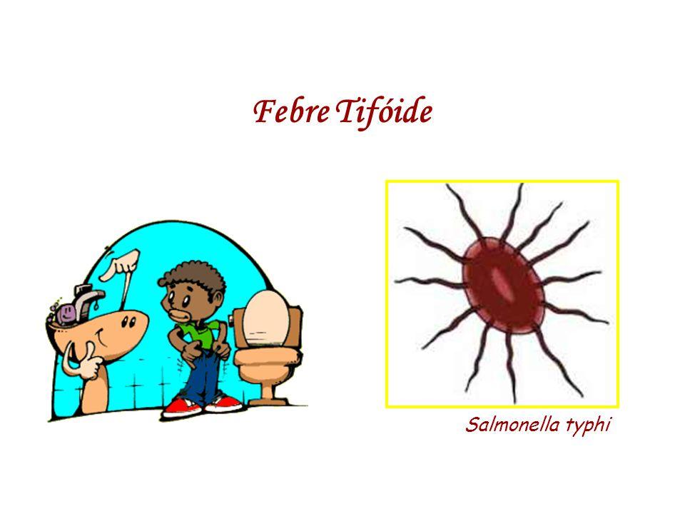 Febre Tifóide Salmonella typhi