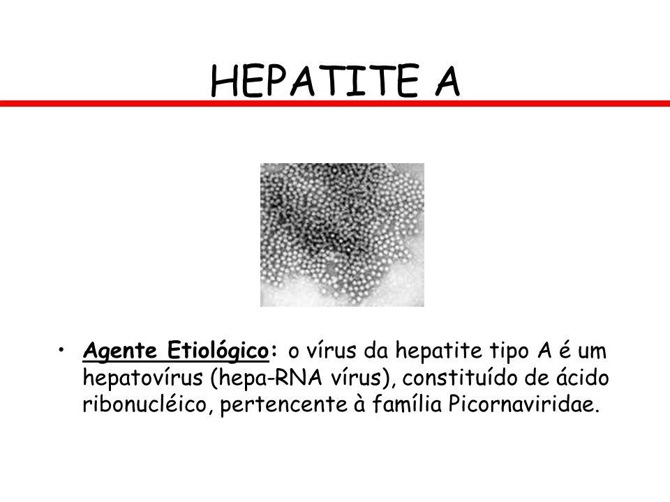 Agente Etiológico: o vírus da hepatite tipo A é um hepatovírus (hepa-RNA vírus), constituído de ácido ribonucléico, pertencente à família Picornavirid