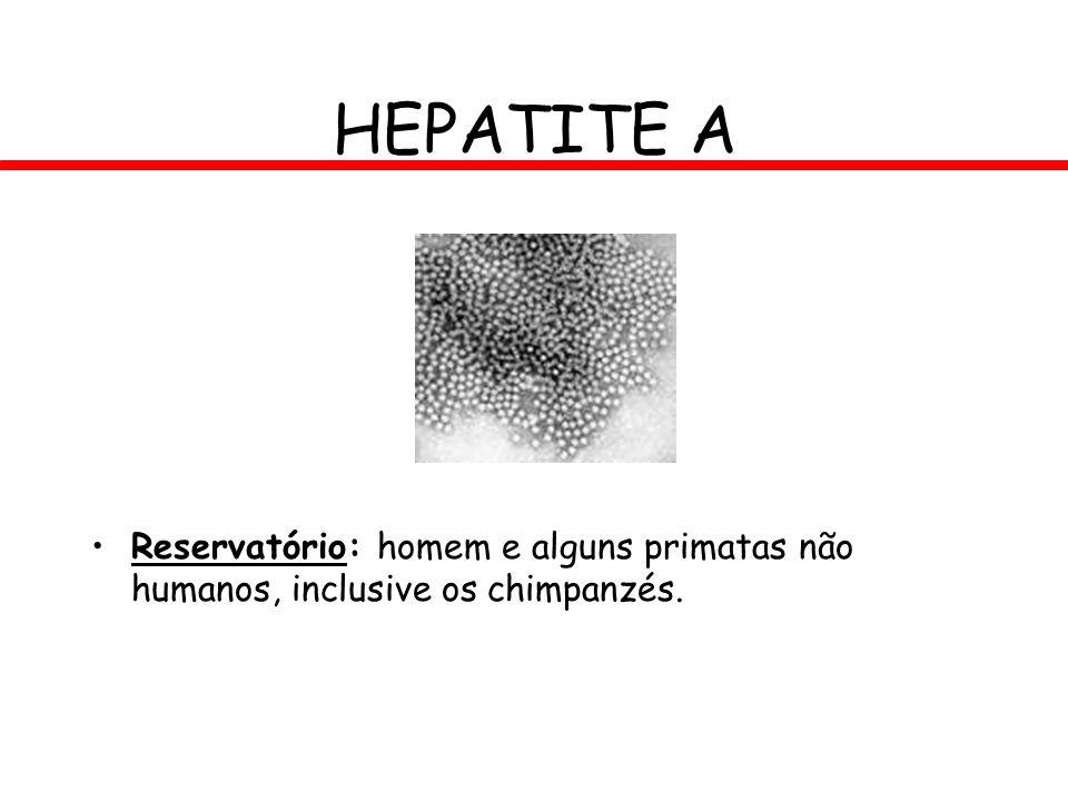HEPATITE A Reservatório: homem e alguns primatas não humanos, inclusive os chimpanzés.