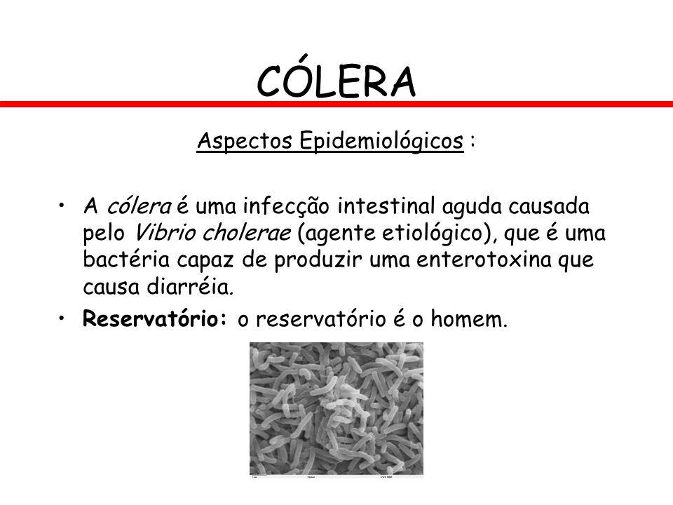 CÓLERA Aspectos Epidemiológicos : A cólera é uma infecção intestinal aguda causada pelo Vibrio cholerae (agente etiológico), que é uma bactéria capaz
