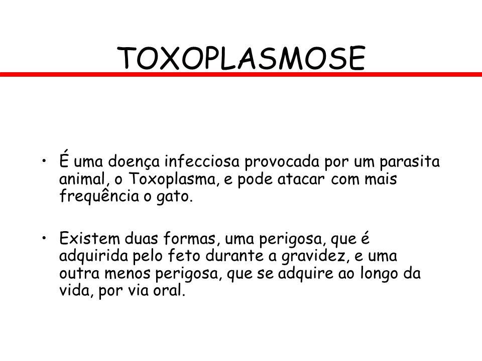 É uma doença infecciosa provocada por um parasita animal, o Toxoplasma, e pode atacar com mais frequência o gato. Existem duas formas, uma perigosa, q