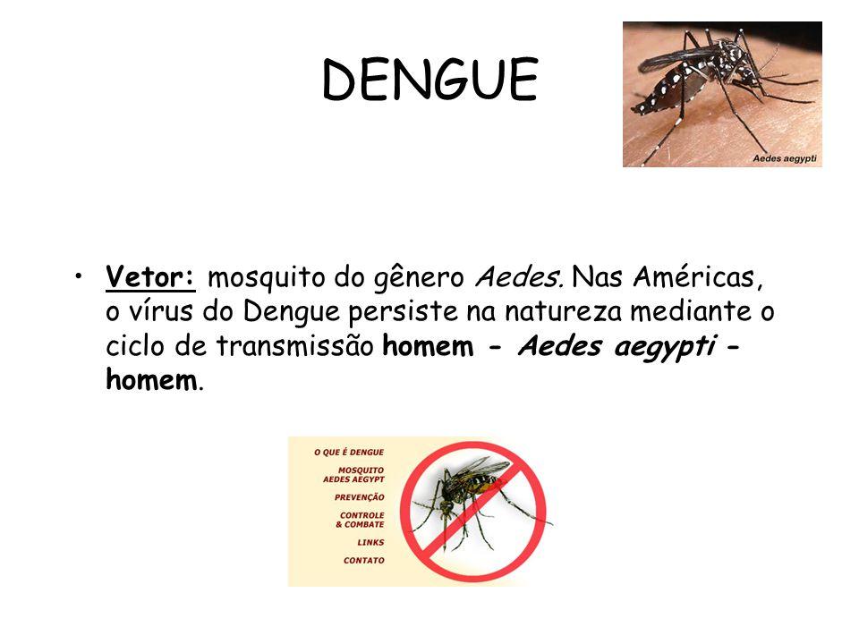 DENGUE Vetor: mosquito do gênero Aedes. Nas Américas, o vírus do Dengue persiste na natureza mediante o ciclo de transmissão homem - Aedes aegypti - h