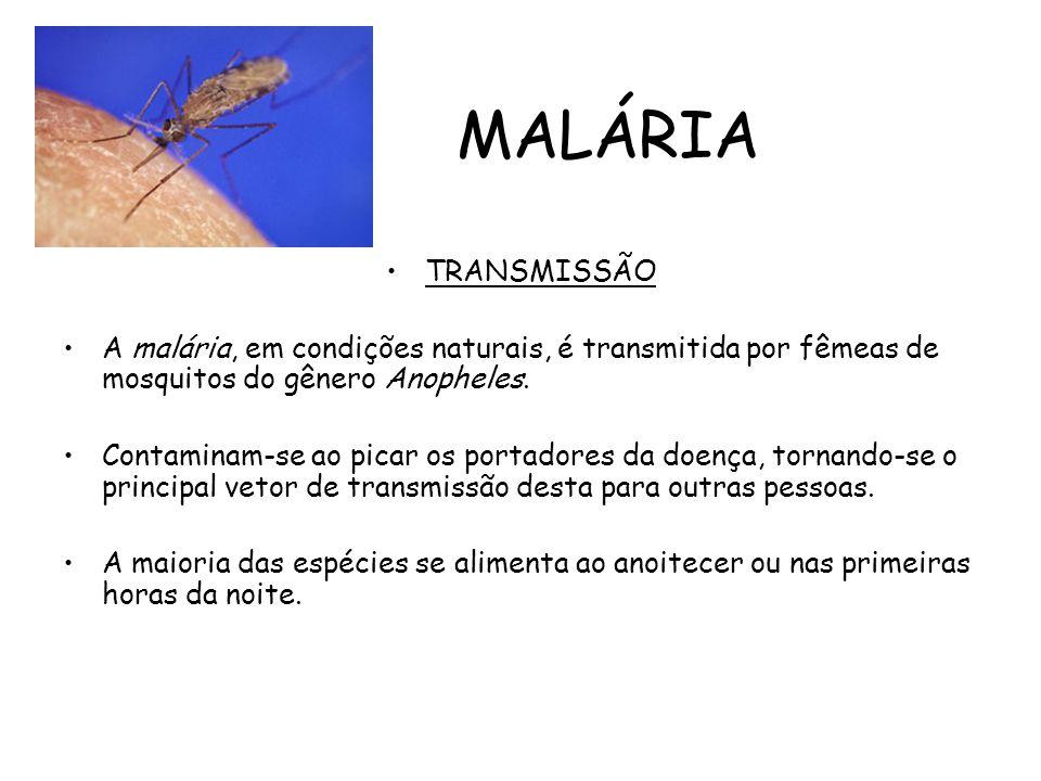 MALÁRIA TRANSMISSÃO A malária, em condições naturais, é transmitida por fêmeas de mosquitos do gênero Anopheles. Contaminam-se ao picar os portadores