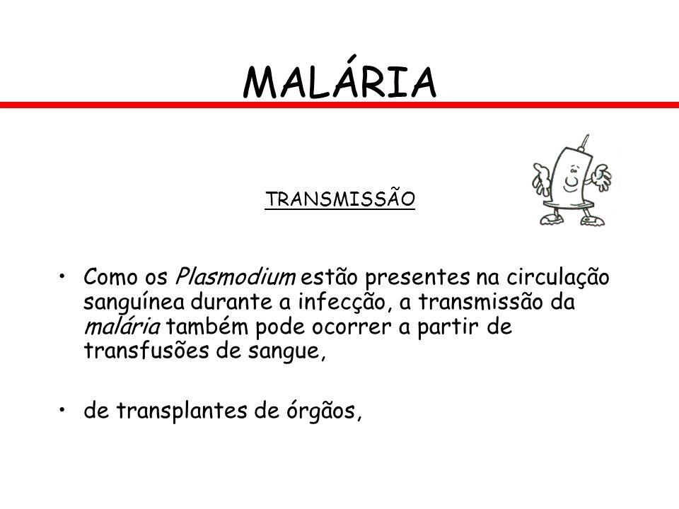 MALÁRIA TRANSMISSÃO Como os Plasmodium estão presentes na circulação sanguínea durante a infecção, a transmissão da malária também pode ocorrer a part