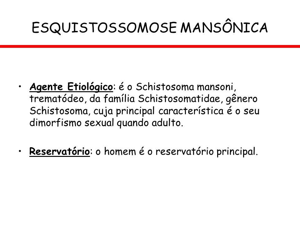 ESQUISTOSSOMOSE MANSÔNICA Agente Etiológico: é o Schistosoma mansoni, trematódeo, da família Schistosomatidae, gênero Schistosoma, cuja principal cara