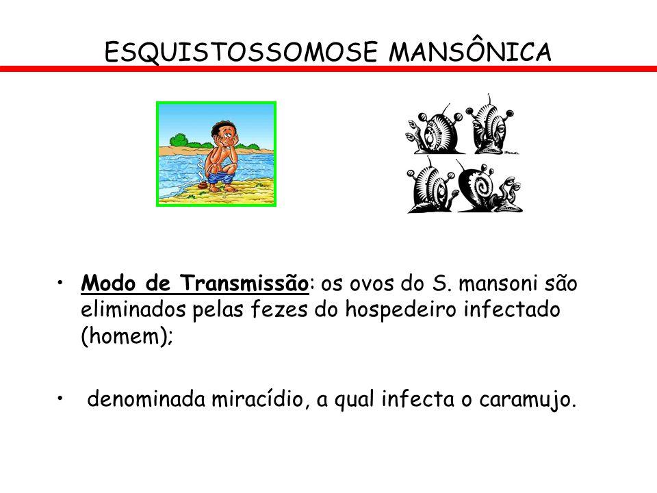 ESQUISTOSSOMOSE MANSÔNICA Modo de Transmissão: os ovos do S. mansoni são eliminados pelas fezes do hospedeiro infectado (homem); denominada miracídio,