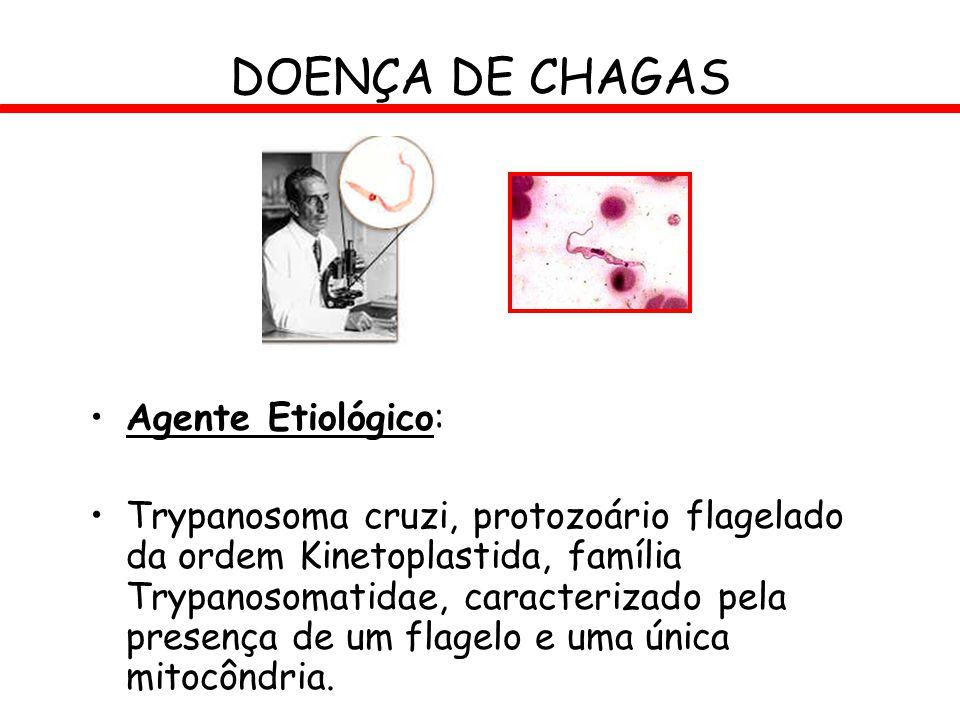 Agente Etiológico: Trypanosoma cruzi, protozoário flagelado da ordem Kinetoplastida, família Trypanosomatidae, caracterizado pela presença de um flage