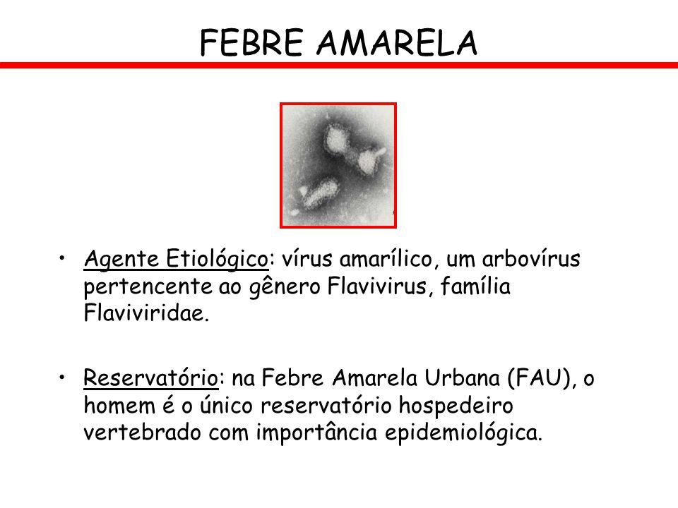 FEBRE AMARELA Agente Etiológico: vírus amarílico, um arbovírus pertencente ao gênero Flavivirus, família Flaviviridae. Reservatório: na Febre Amarela