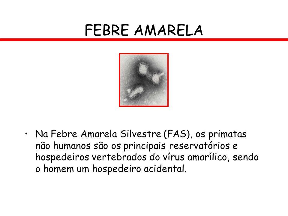 FEBRE AMARELA Na Febre Amarela Silvestre (FAS), os primatas não humanos são os principais reservatórios e hospedeiros vertebrados do vírus amarílico,