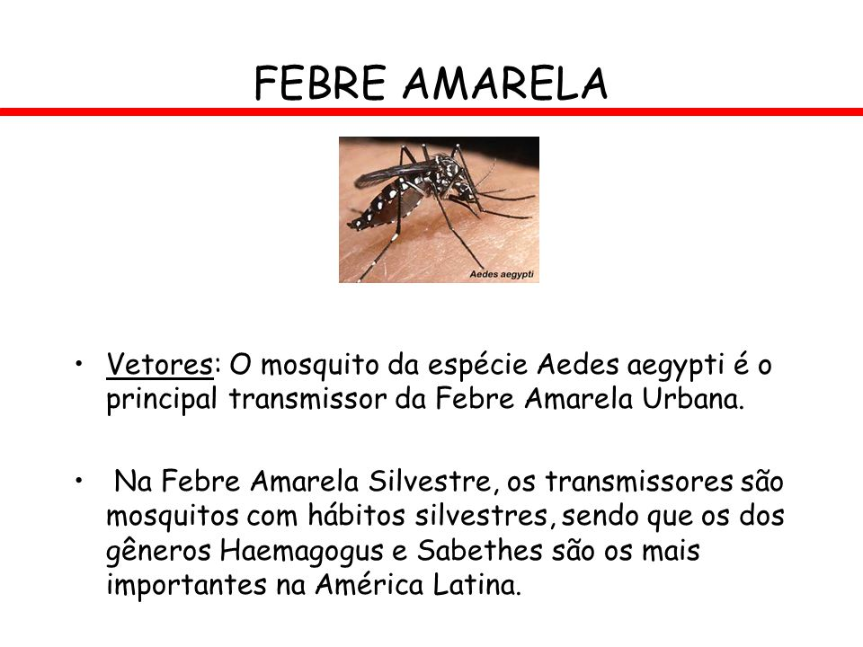 FEBRE AMARELA Vetores: O mosquito da espécie Aedes aegypti é o principal transmissor da Febre Amarela Urbana. Na Febre Amarela Silvestre, os transmiss
