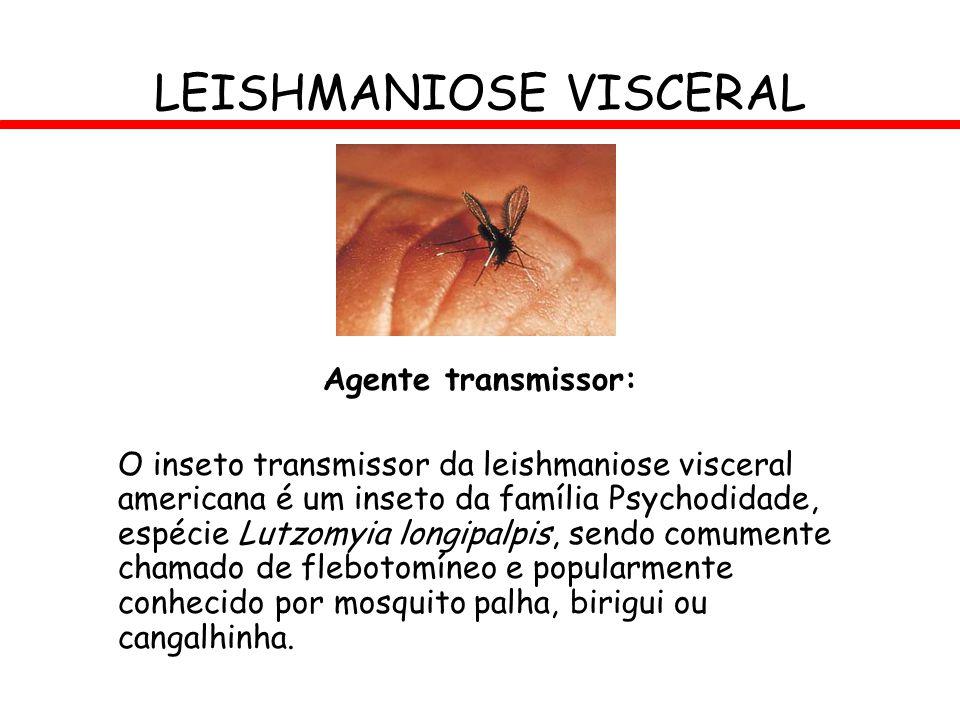 LEISHMANIOSE VISCERAL Agente transmissor: O inseto transmissor da leishmaniose visceral americana é um inseto da família Psychodidade, espécie Lutzomy
