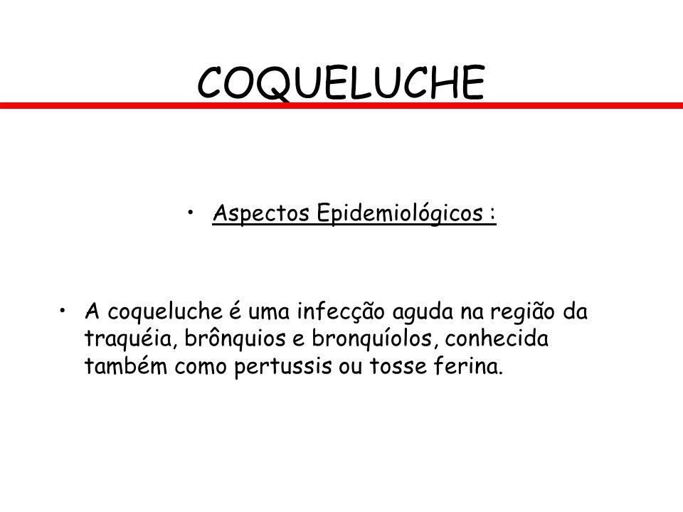 COQUELUCHE Aspectos Epidemiológicos : A coqueluche é uma infecção aguda na região da traquéia, brônquios e bronquíolos, conhecida também como pertussi