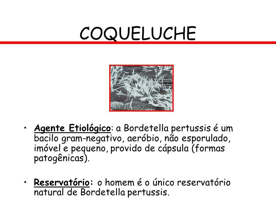 COQUELUCHE Agente Etiológico: a Bordetella pertussis é um bacilo gram-negativo, aeróbio, não esporulado, imóvel e pequeno, provido de cápsula (formas