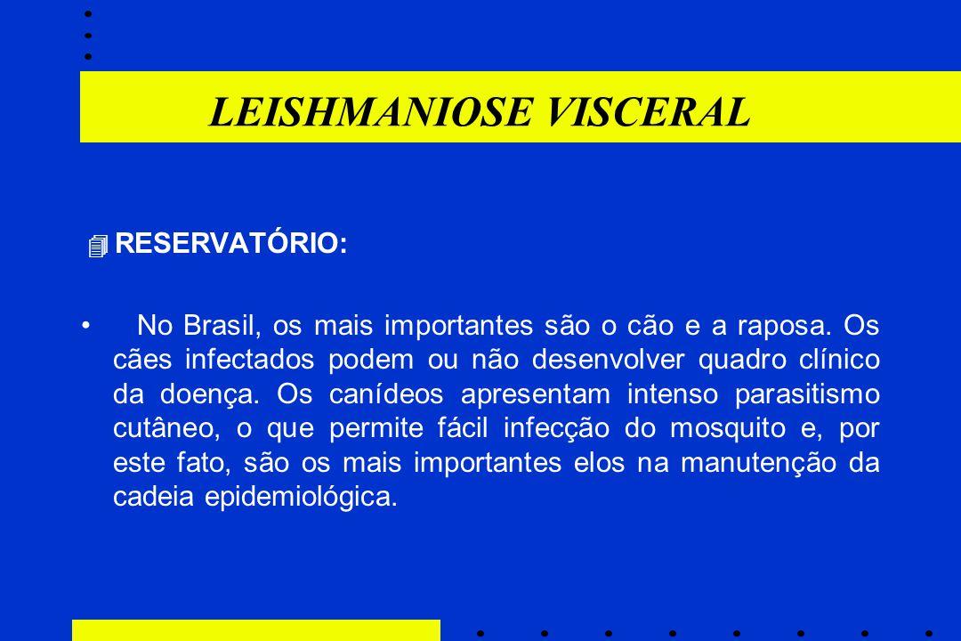 LEISHMANIOSE VISCERAL  RESERVATÓRIO: No Brasil, os mais importantes são o cão e a raposa. Os cães infectados podem ou não desenvolver quadro clínico