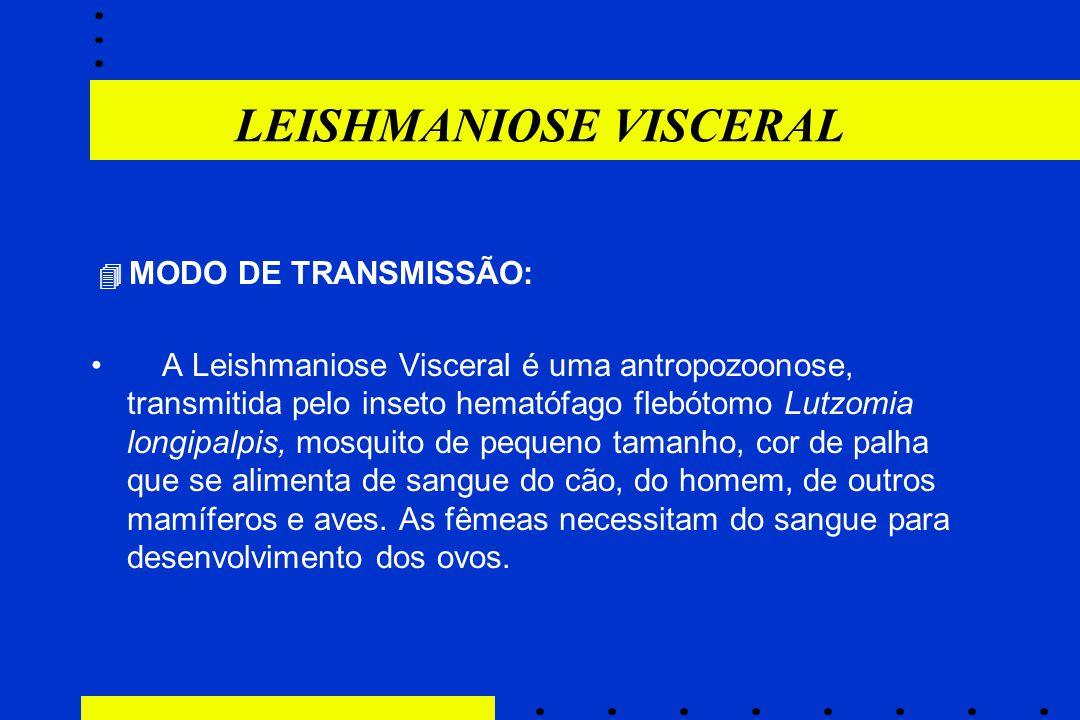 LEISHMANIOSE VISCERAL  MODO DE TRANSMISSÃO: A Leishmaniose Visceral é uma antropozoonose, transmitida pelo inseto hematófago flebótomo Lutzomia longi