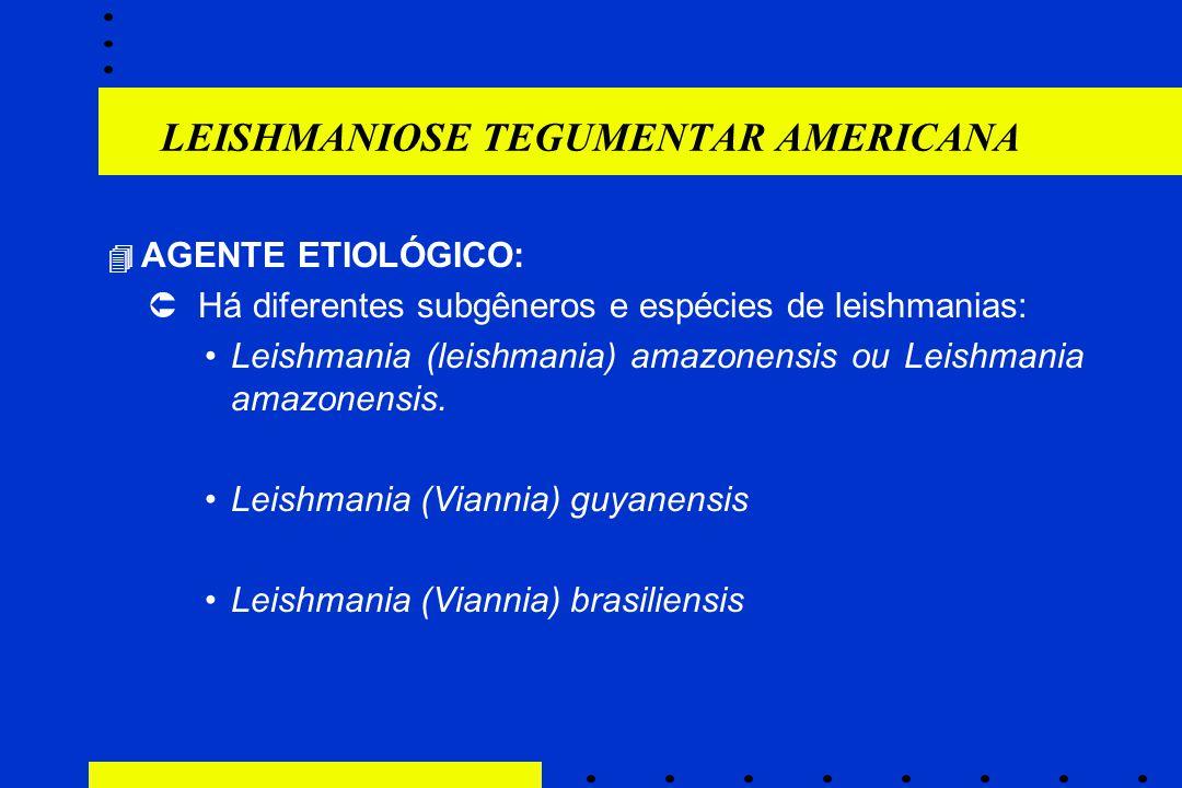 LEISHMANIOSE TEGUMENTAR AMERICANA  AGENTE ETIOLÓGICO:  Há diferentes subgêneros e espécies de leishmanias: Leishmania (leishmania) amazonensis ou Le