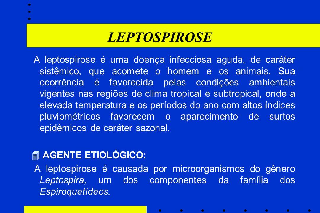 LEPTOSPIROSE A leptospirose é uma doença infecciosa aguda, de caráter sistêmico, que acomete o homem e os animais. Sua ocorrência é favorecida pelas c