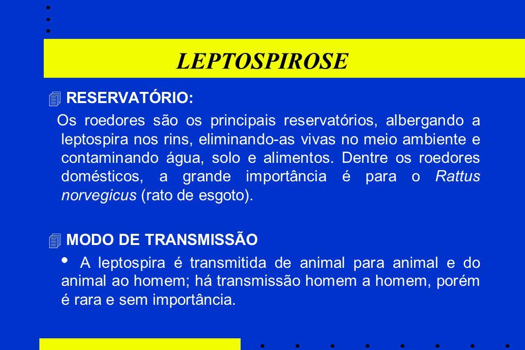 LEPTOSPIROSE  RESERVATÓRIO: Os roedores são os principais reservatórios, albergando a leptospira nos rins, eliminando-as vivas no meio ambiente e con