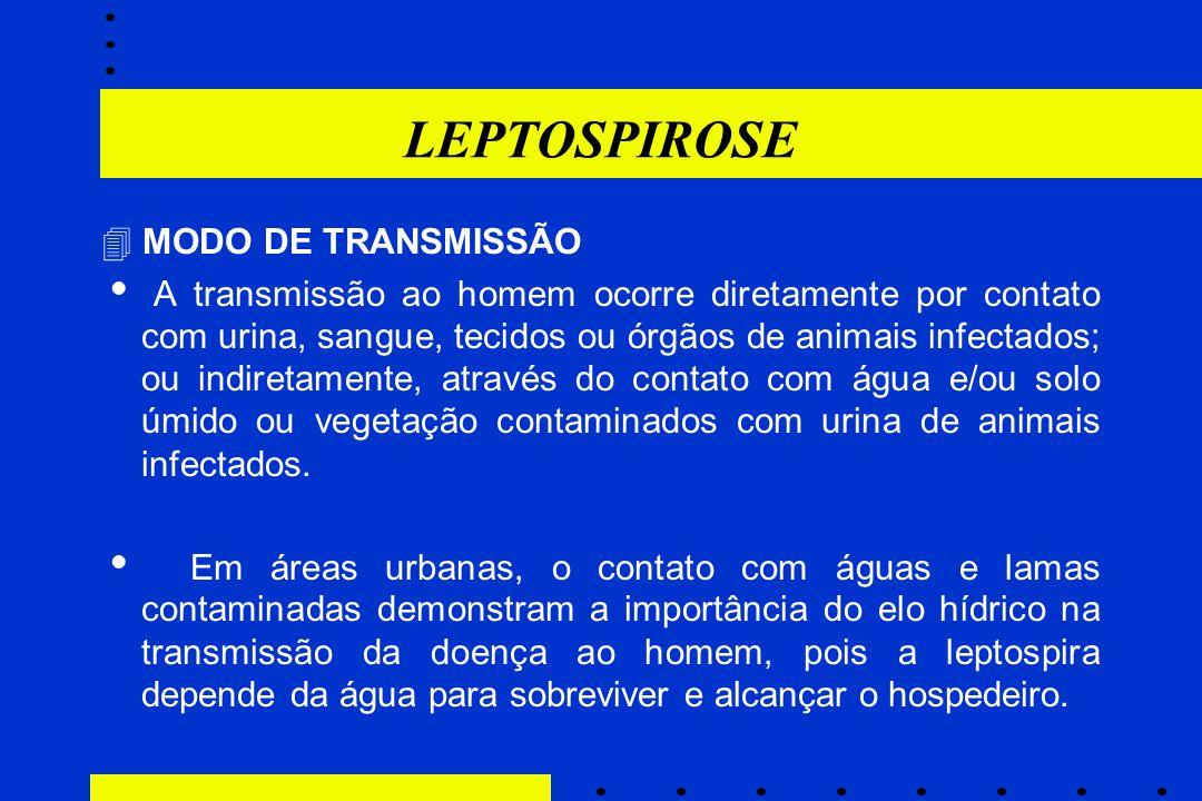 LEPTOSPIROSE  MODO DE TRANSMISSÃO  A transmissão ao homem ocorre diretamente por contato com urina, sangue, tecidos ou órgãos de animais infectados;