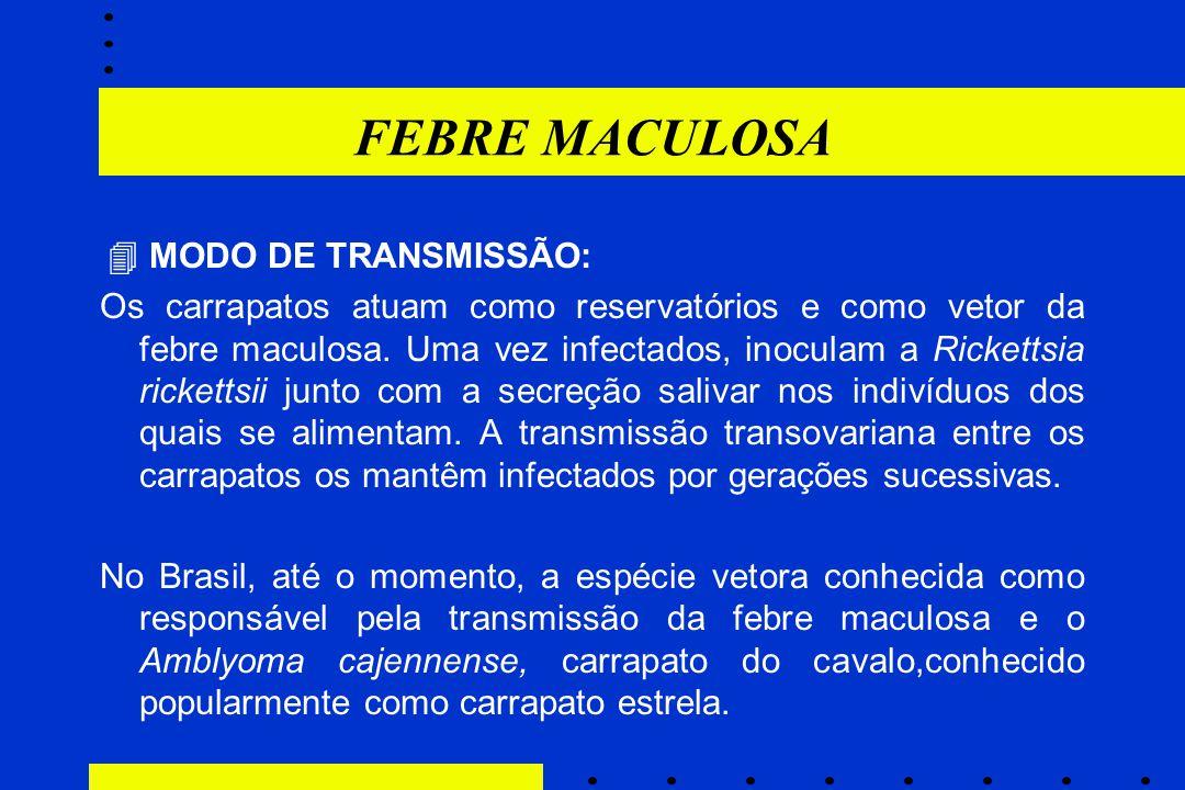 FEBRE MACULOSA  MODO DE TRANSMISSÃO: Os carrapatos atuam como reservatórios e como vetor da febre maculosa. Uma vez infectados, inoculam a Rickettsia
