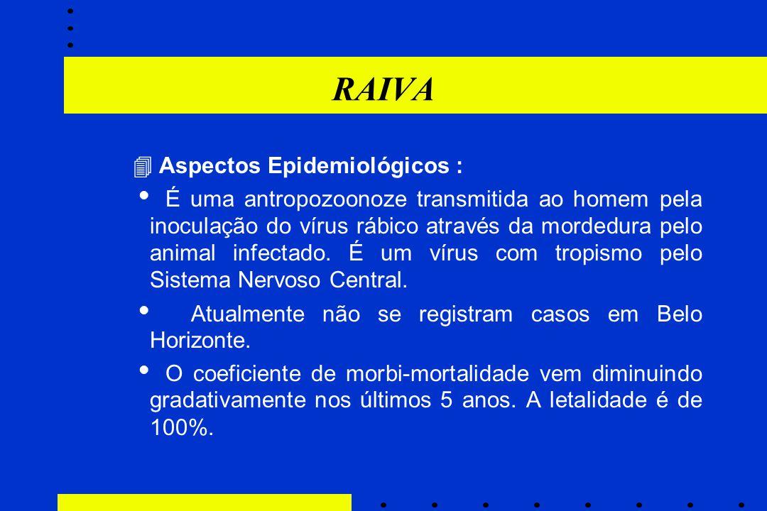 RAIVA  Aspectos Epidemiológicos :  É uma antropozoonoze transmitida ao homem pela inoculação do vírus rábico através da mordedura pelo animal infect
