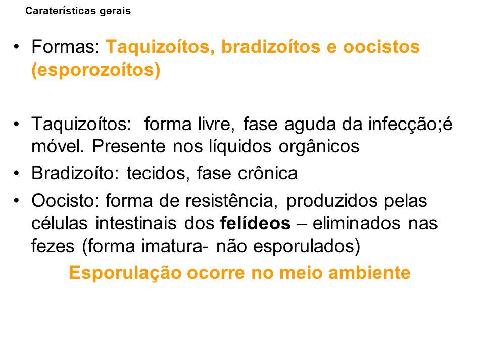 Caraterísticas gerais Formas: Taquizoítos, bradizoítos e oocistos (esporozoítos) Taquizoítos: forma livre, fase aguda da infecção;é móvel. Presente no