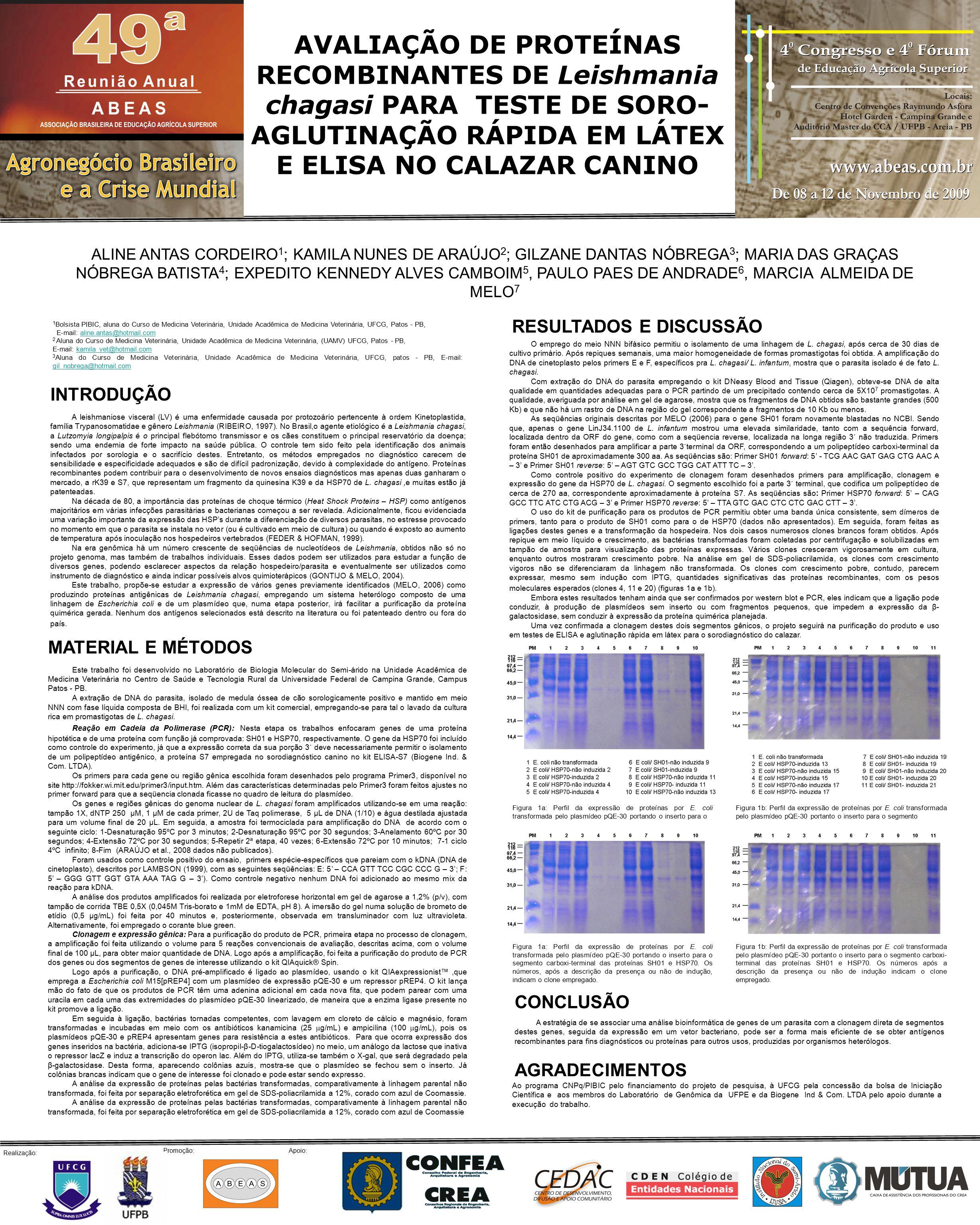 ALINE ANTAS CORDEIRO 1 ; KAMILA NUNES DE ARAÚJO 2 ; GILZANE DANTAS NÓBREGA 3 ; MARIA DAS GRAÇAS NÓBREGA BATISTA 4 ; EXPEDITO KENNEDY ALVES CAMBOIM 5, PAULO PAES DE ANDRADE 6, MARCIA ALMEIDA DE MELO 7 AVALIAÇÃO DE PROTEÍNAS RECOMBINANTES DE Leishmania chagasi PARA TESTE DE SORO- AGLUTINAÇÃO RÁPIDA EM LÁTEX E ELISA NO CALAZAR CANINO A leishmaniose visceral (LV) é uma enfermidade causada por protozoário pertencente à ordem Kinetoplastida, família Trypanosomatidae e gênero Leishmania (RIBEIRO, 1997).