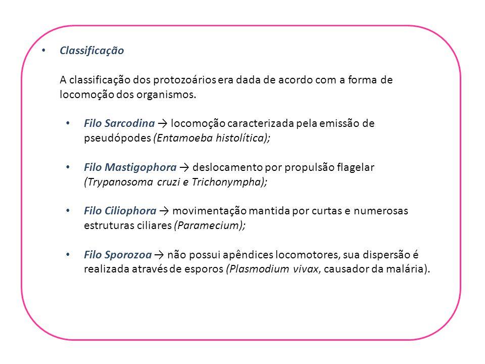 Classificação A classificação dos protozoários era dada de acordo com a forma de locomoção dos organismos. Filo Sarcodina → locomoção caracterizada pe