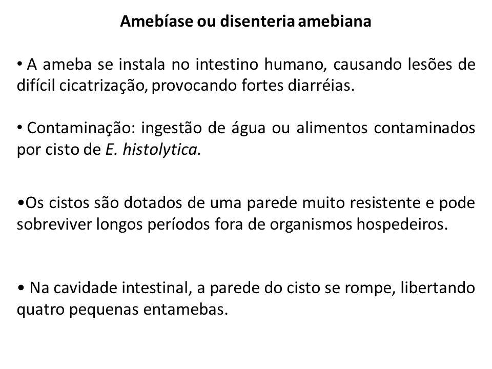 Amebíase ou disenteria amebiana A ameba se instala no intestino humano, causando lesões de difícil cicatrização, provocando fortes diarréias. Contamin