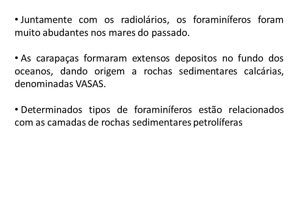 Juntamente com os radiolários, os foraminíferos foram muito abudantes nos mares do passado.