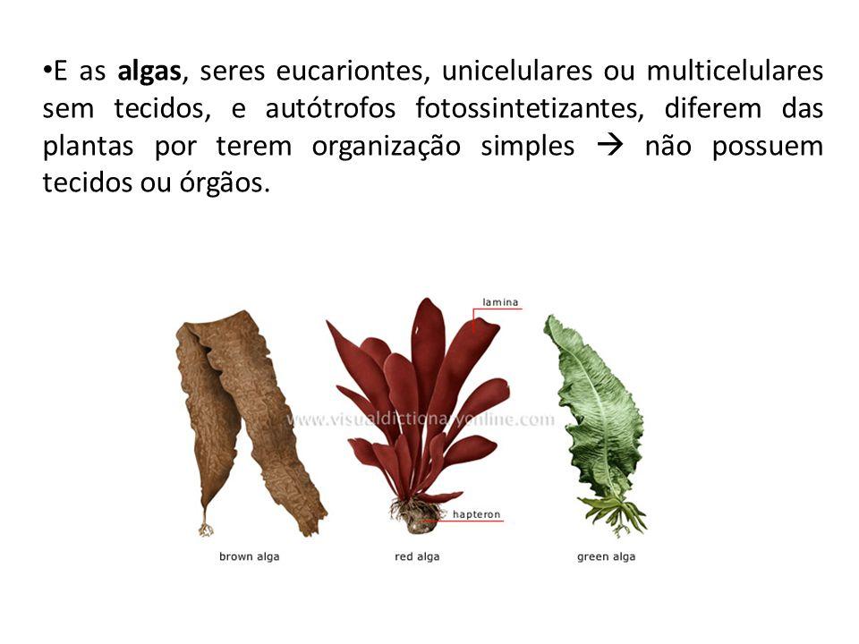 E as algas, seres eucariontes, unicelulares ou multicelulares sem tecidos, e autótrofos fotossintetizantes, diferem das plantas por terem organização simples  não possuem tecidos ou órgãos.