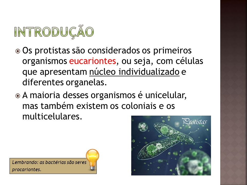  Os protistas são considerados os primeiros organismos eucariontes, ou seja, com células que apresentam núcleo individualizado e diferentes organelas