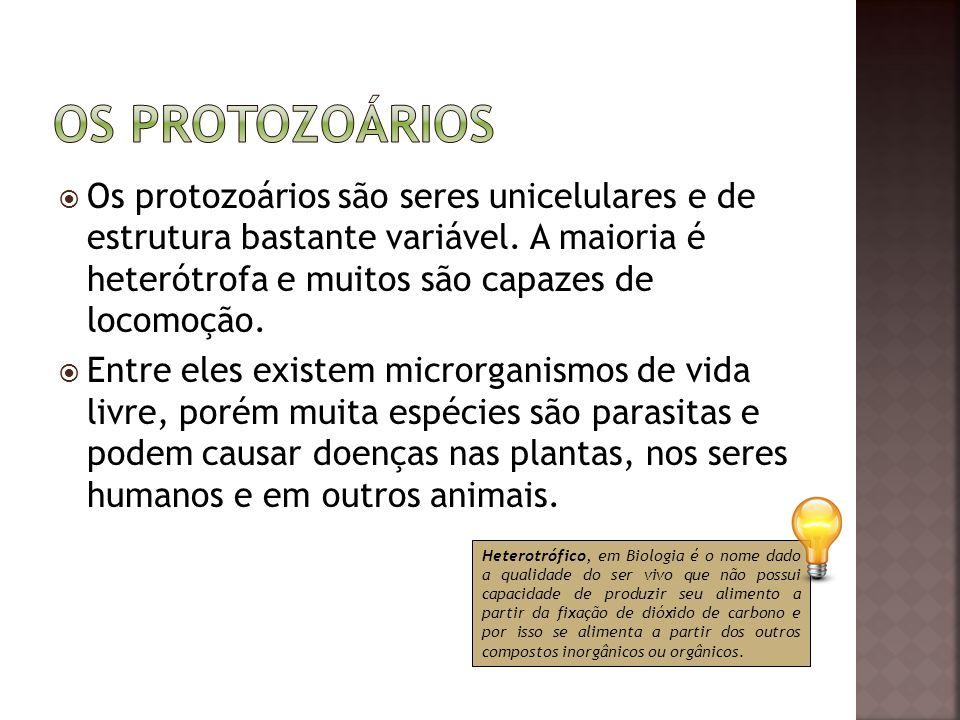  Os protozoários são seres unicelulares e de estrutura bastante variável. A maioria é heterótrofa e muitos são capazes de locomoção.  Entre eles exi