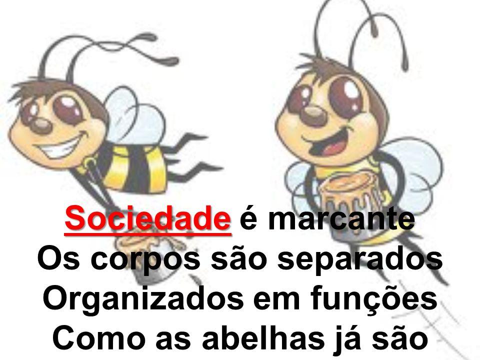 Sociedade Sociedade é marcante Os corpos são separados Organizados em funções Como as abelhas já são