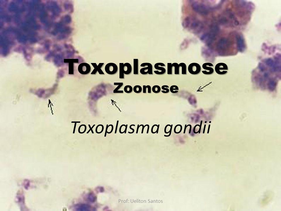 Toxoplasma gondii ToxoplasmoseZoonose Prof: Ueliton Santos