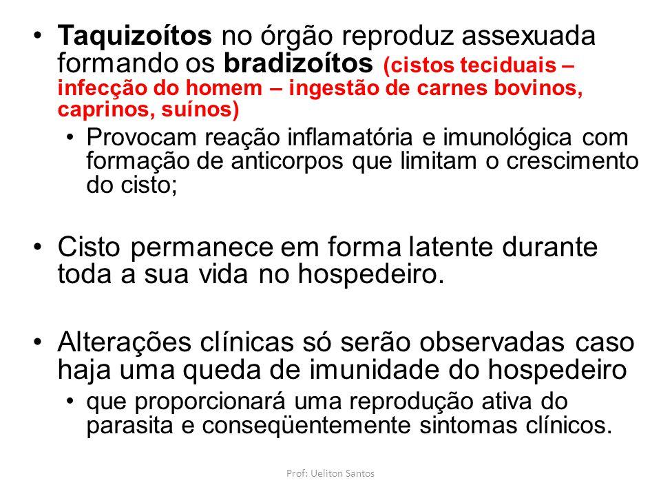 Taquizoítos no órgão reproduz assexuada formando os bradizoítos (cistos teciduais – infecção do homem – ingestão de carnes bovinos, caprinos, suínos)