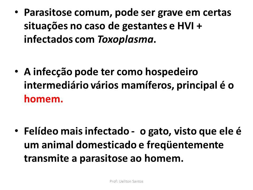 Parasitose comum, pode ser grave em certas situações no caso de gestantes e HVI + infectados com Toxoplasma. A infecção pode ter como hospedeiro inter