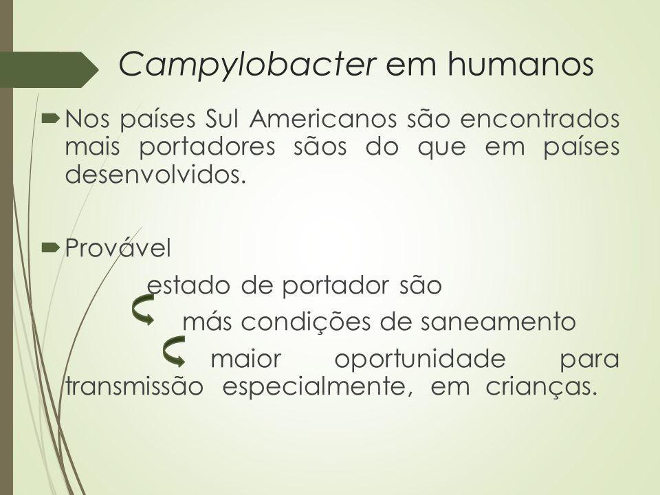 Campylobacter em humanos  Nos países Sul Americanos são encontrados mais portadores sãos do que em países desenvolvidos.  Provável estado de portado