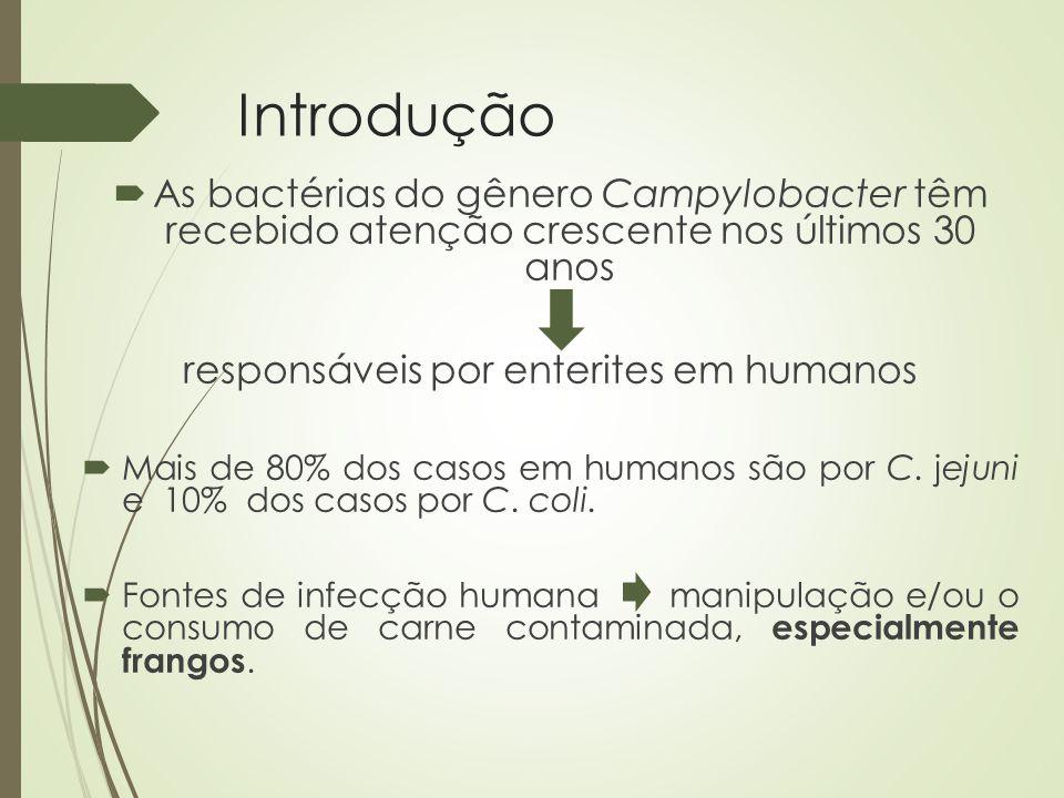 Campylobacter em Frangos  É geralmente aceite na comunidade científica  É geralmente aceite na comunidade científica que transmissão vertical não contribui para a colonização de lotes, e os pássaros geralmente não adquirem Campylobacter até 2 a 3 semanas de idade.