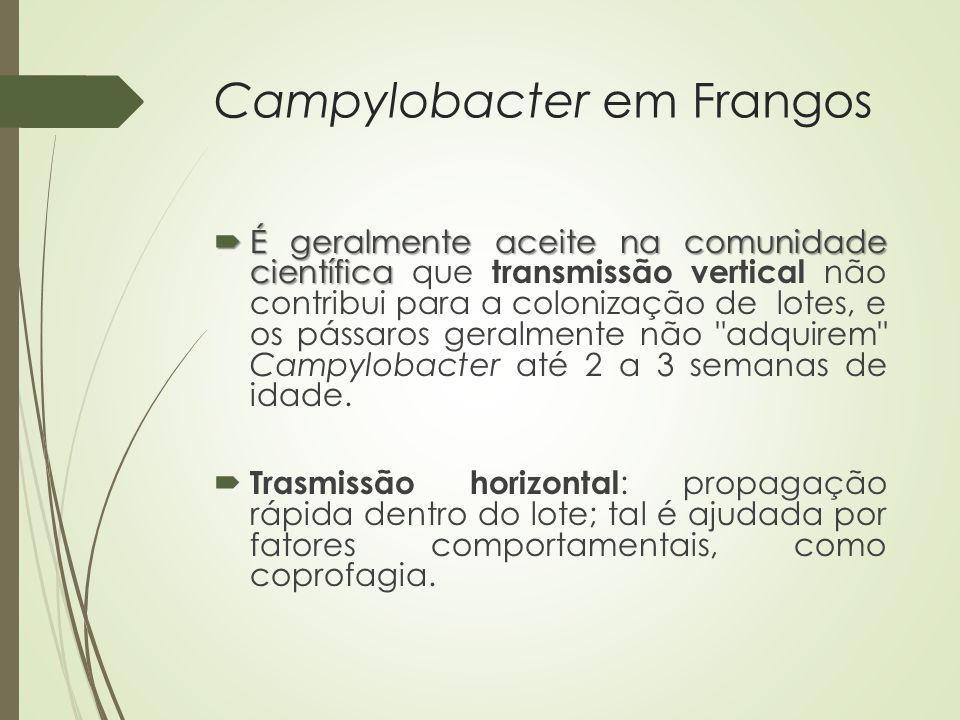 Campylobacter em Frangos  É geralmente aceite na comunidade científica  É geralmente aceite na comunidade científica que transmissão vertical não co
