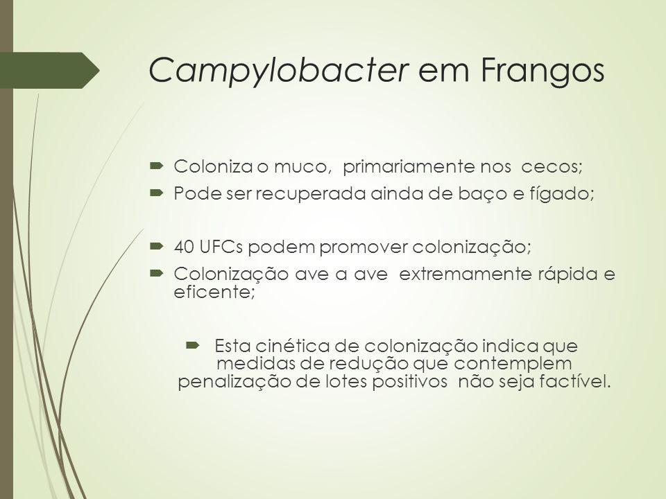 Campylobacter em Frangos  Coloniza o muco, primariamente nos cecos;  Pode ser recuperada ainda de baço e fígado;  40 UFCs podem promover colonizaçã