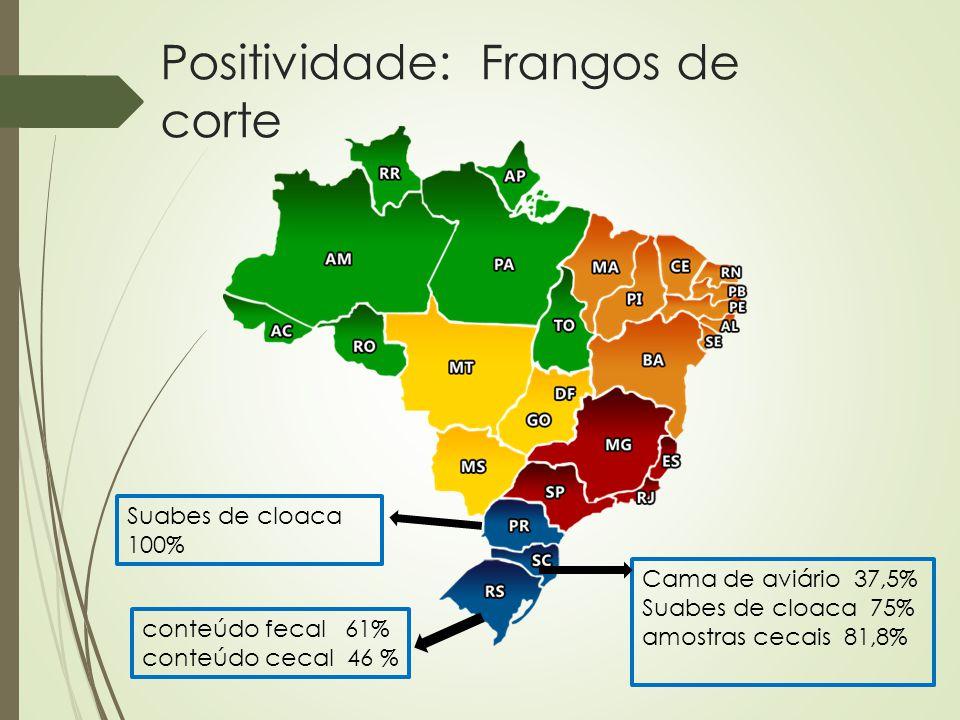 Positividade: Frangos de corte Cama de aviário 37,5% Suabes de cloaca 75% amostras cecais 81,8% conteúdo fecal 61% conteúdo cecal 46 % Suabes de cloac