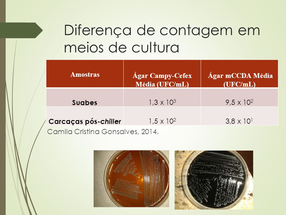 Diferença de contagem em meios de cultura Camila Cristina Gonsalves, 2014. Amostras Ágar Campy-Cefex Média (UFC/mL) Ágar mCCDA Média (UFC/mL) Suabes 1