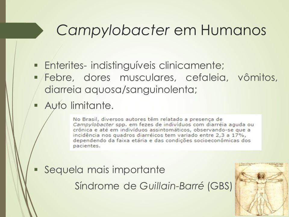 Campylobacter em Humanos  Enterites- indistinguíveis clinicamente;  Febre, dores musculares, cefaleia, vômitos, diarreia aquosa/sanguinolenta;  Aut