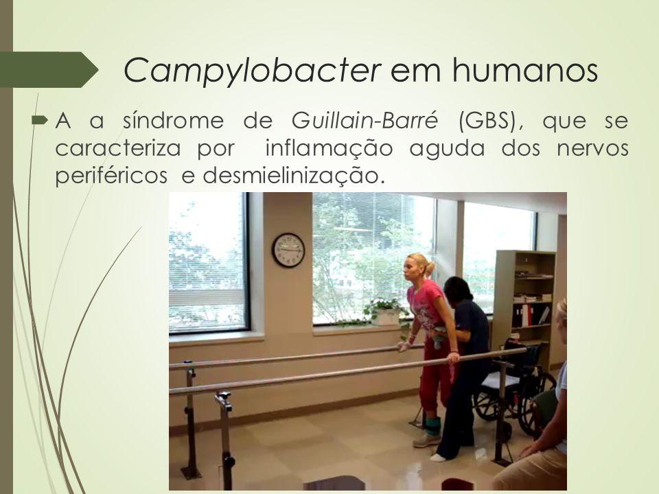 Campylobacter em humanos  De acordo com a WHO (2012) em decorrência da infecção por Campylobacter, foi estimada a incidência de 1/3 dos casos de GBS 1 a 15 % dos casos de artrite reativa 36% dos casos de síndrome do intestino irritável (desenvolvida dentro de 1 a 2 anos após a infecção