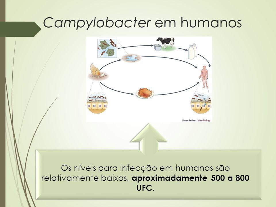 Campylobacter em humanos Os níveis para infecção em humanos são relativamente baixos, aproximadamente 500 a 800 UFC.